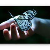 Association la pause du papillon